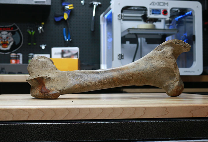 3D Scanning Mammoth Bone